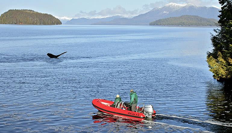 Zodiac Boat Scenic Tour Ketchikan Whale