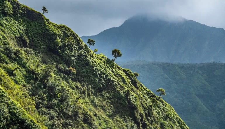 Helicopter Tour Kauai Discover Kauai Flight - 45 Minutes (Princeville) Green