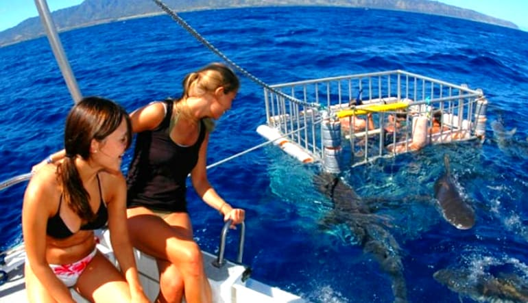 Shark Tour Oahu, North Shore - 2 Hours