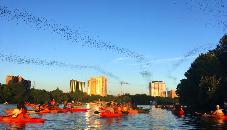 Kayak Tour Austin, Congress Ave Bridge Bat Tour Swam