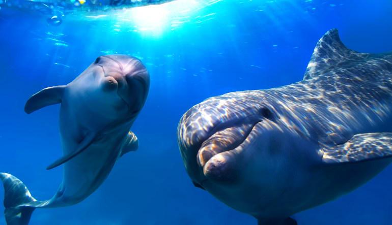 Dolhin Odyssey Miami Sea Aquarium