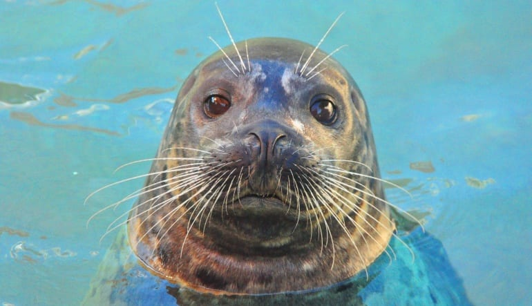 Seal Swim Miami with Admission to Seaquarium Big Eyes