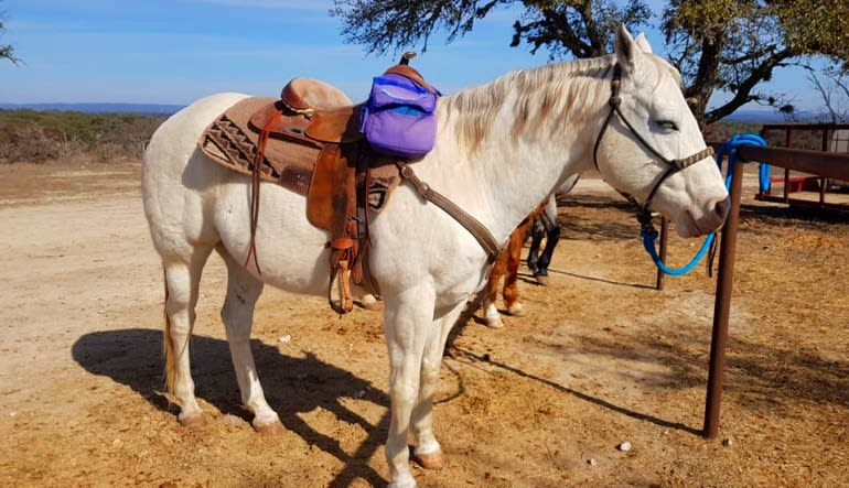 Horseback Riding San Antonio, Texas Hill Country Saddled Up