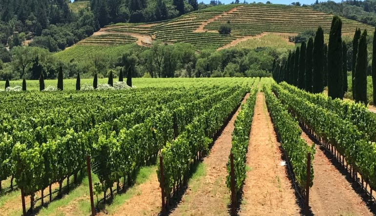 San Francisco Private Wine Tour, Sonoma Country Vineyards