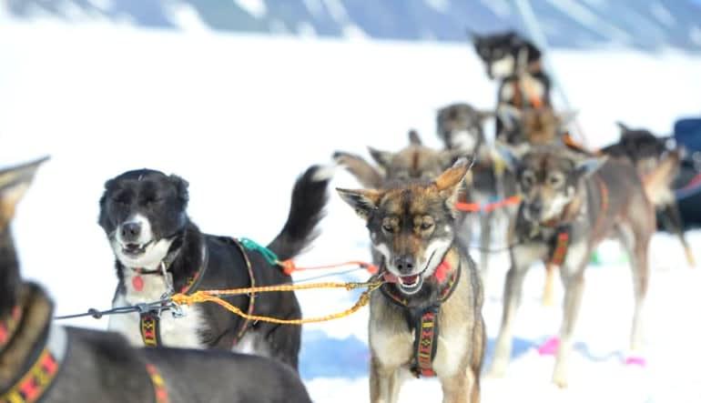 Helicopter and Glacier Dogsled Tour Team