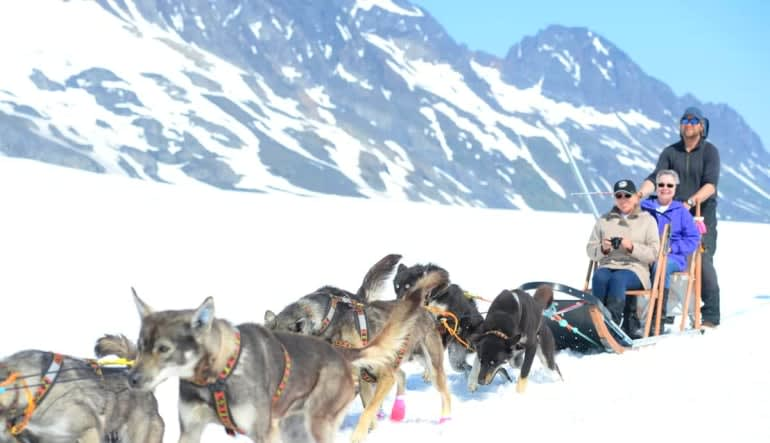 Helicopter and Glacier Dogsled Tour Doggies