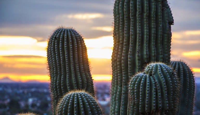 Grand Canyon South Rim Luxury Mini Coach Tour from Las Vegas, Day Trip Cactus