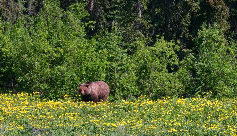Yukon Hummer Tour Klondike - 5 Hours Bear
