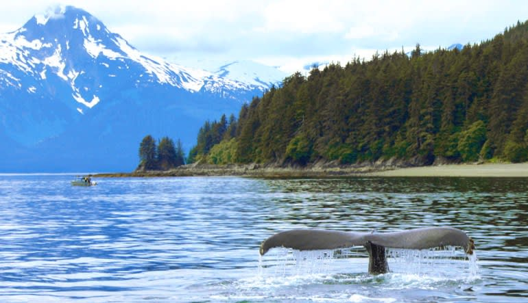 Whale Watching Adventure, Juneau - 3 Hours Tail