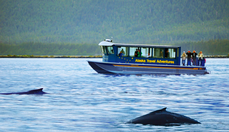 Whale Watching Adventure, Juneau - 3 Hours Boat