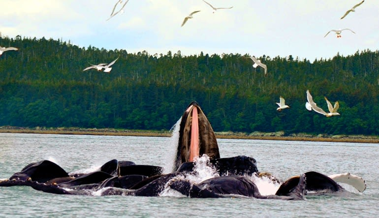 Whale Watching Adventure, Juneau - 3 Hours Play