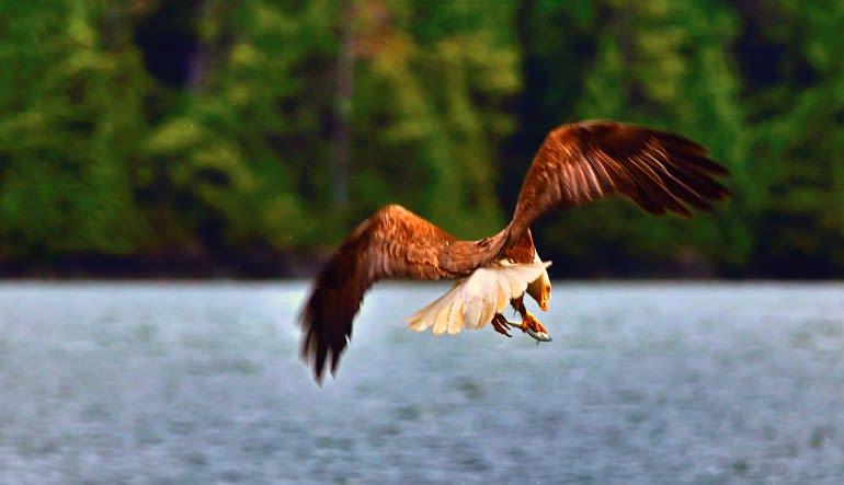 Sitka Sea Kayaking Tour - 3 Hours Eagle