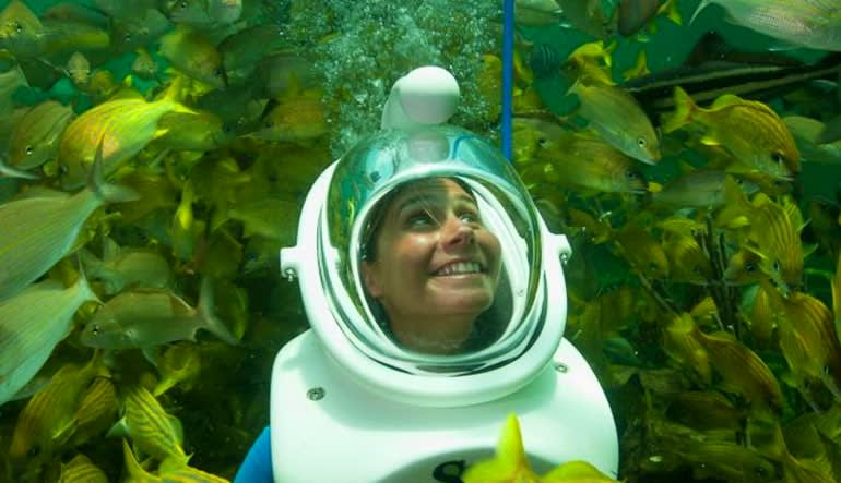 Sea Trek Encounter Miami with Admission to Seaquarium