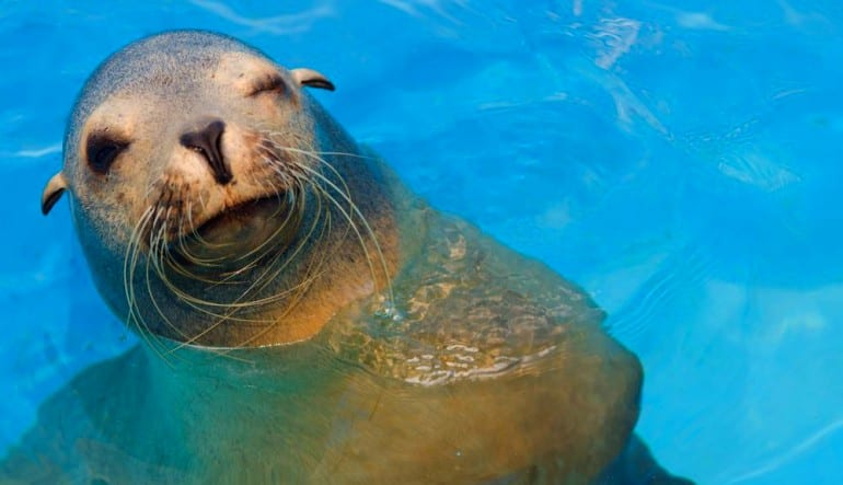 Sea Lion Swim Hawaii with Admission to Sea Life Park Wink