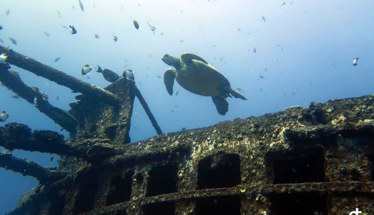 Scuba Diving Oahu - 3.5 Hours (Wreck and Reef Dive!)  Turtle