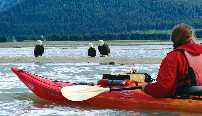Kayaking Mendenhall Glacier View Tour, Juneau - 3.5 hours Wildlife