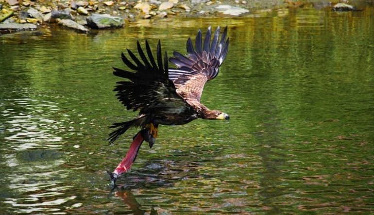 Rain Forest Sanctuary, Totem Park and Eagles Walking Tour - 2.75 Hours Hunt