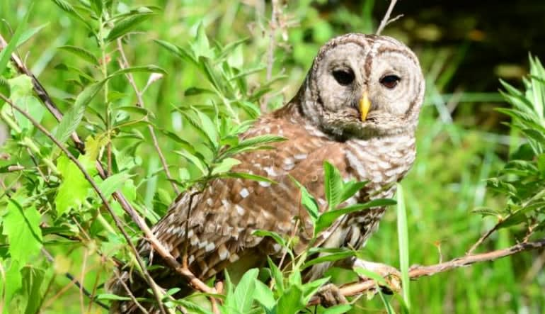 Trail Buggy Adventure Explore the Wild - 45 Minutes Owl