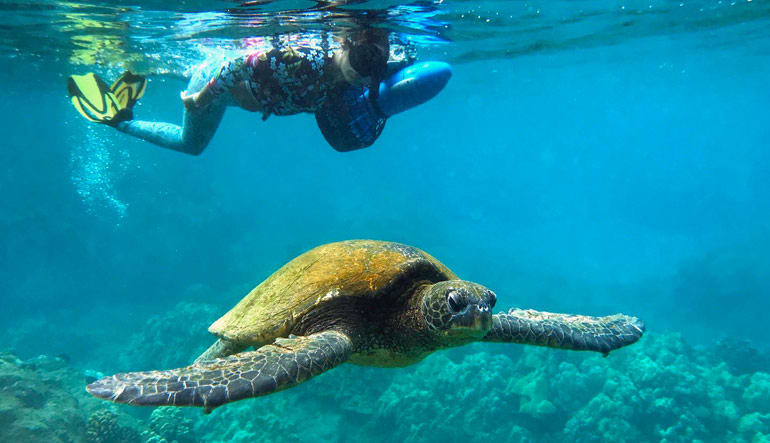 Private Sea Scooter Snorkeling Tour Maui - 2 Hours