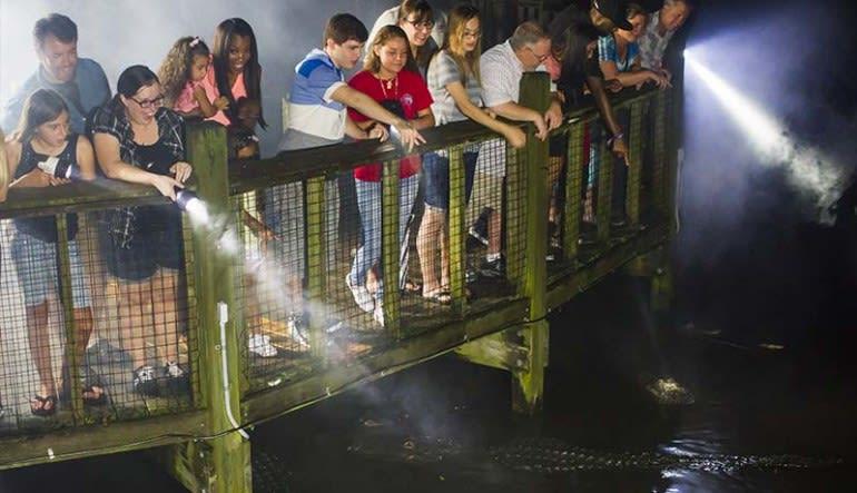 Gator Night Shine Adventure, Gatorland - 1.5 Hours
