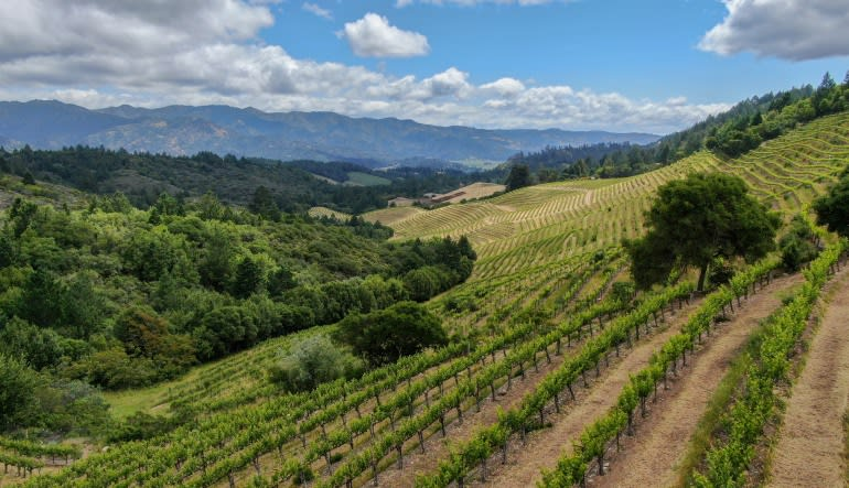 Napa Valley Wine Country Flight for 2 - 1.5 Hours