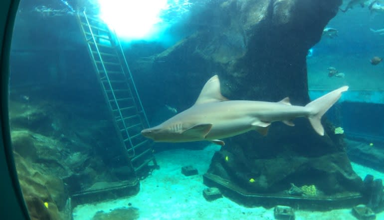 Shark Encounter Adventure Tour Oahu - 7 Hours with Luxury Transportation