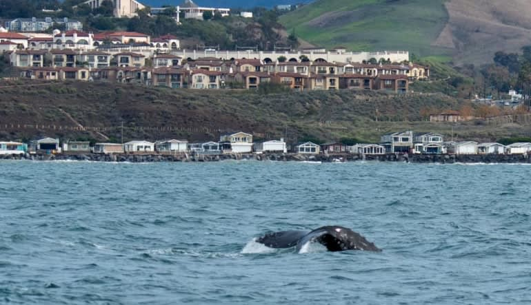 Whale & Dolphin Watching Tour, Dana Point - 2 Hours