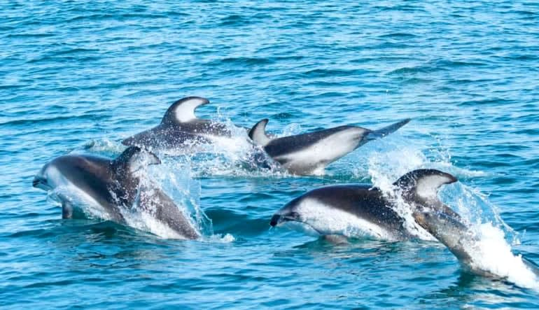 Whale & Dolphin Watching Tour, Dana Point - 2 Hours (SPECIAL PRICE-TUESDAY'S ONLY)