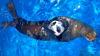 Seal Swim Miami with Admission to Seaquarium Play