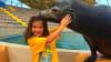 Seal Swim Miami with Admission to Seaquarium Little Girl