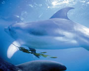 Swim With Dolphins & Seals - Mornington Peninsula, VIC