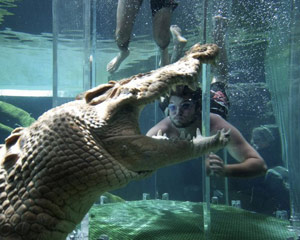 Swim With Crocodiles in the Cage Of Death & Cove Entry for 2 - Darwin, NT