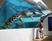 Crocosaurus Cove Entry For 2 - Darwin