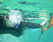 Snorkeling, Snorkel Tour with Sea Dragons - Mornington Peninsula