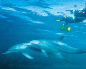 Swim With Dolphins - Rockingham Perth