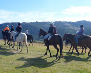 Horse Riding - One Hour Trail Ride with Tuition - Blue Mountains
