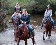Horse Riding - Two Hour Trail Ride with Tuition - Blue Mountains