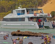 Moreton Island Dolphin, Dugong and Tangalooma Wrecks Cruise - Redcliffe QLD