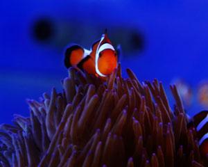 Underwater World SEA LIFE Mooloolaba Aquarium Entry For 2