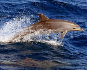 Marine Discovery Cruise with Buffet Lunch - Mooloolaba