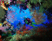Discover Scuba Diving Experience - Gold Coast