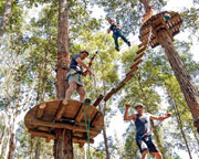 Tree Top Adventure Park Experience - Central Coast