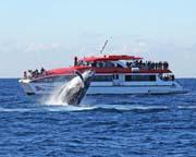 Whale Watching Cruise - Circular Quay, Sydney