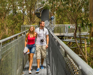 Otway Fly Treetop Walk - Otways FAMILY PASS