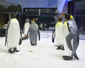SEA LIFE Sydney Aquarium – Penguin Passport