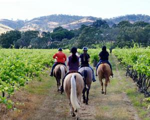 Barossa Horse Riding, 1.5hr Vineyard Journey Tour - Barossa Valley Adelaide