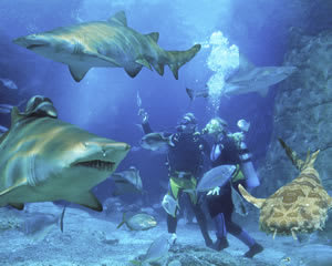 Dive With Sharks - Sunshine Coast SEA LIFE Aquarium