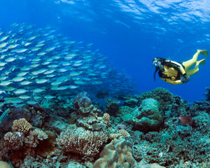 Scuba dive the great barrier reef non certified divers cairns adrenaline - Best place to dive the great barrier reef ...