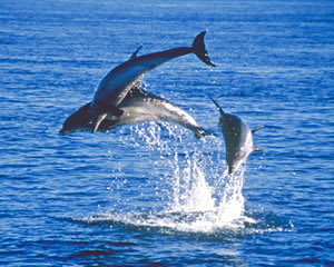 Dolphin Experience, Sightseeing Cruise - Mornington Peninsula, VIC