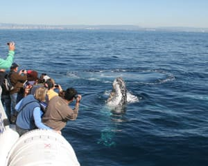 Whale Watching Cruise, Family Pass - Gold Coast, QLD